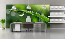 Dew-droplets-office-wall-murals-demur