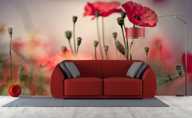 Red-poppies-poppy-wall-murals-demur