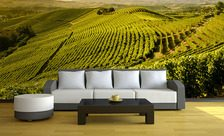 Green-slopes-in-the-sunshine-landscape-wall-murals-demur