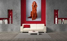 Sitting-in-silence-animals-wall-prints-demur